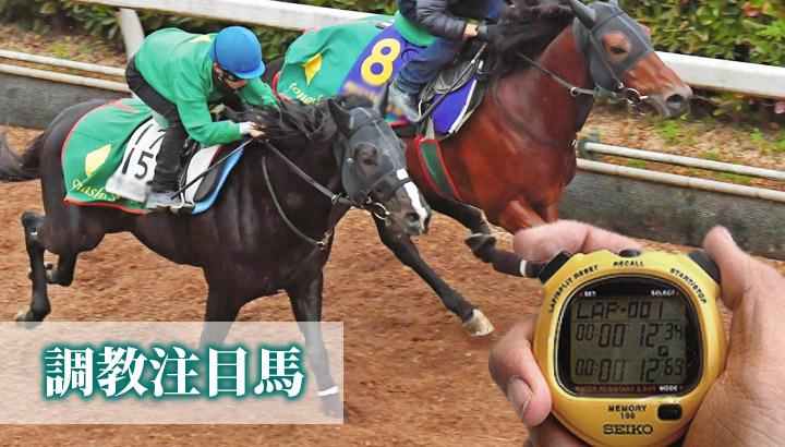 きさらぎ賞・東京新聞杯の調教チェック<2020年2月第2週>