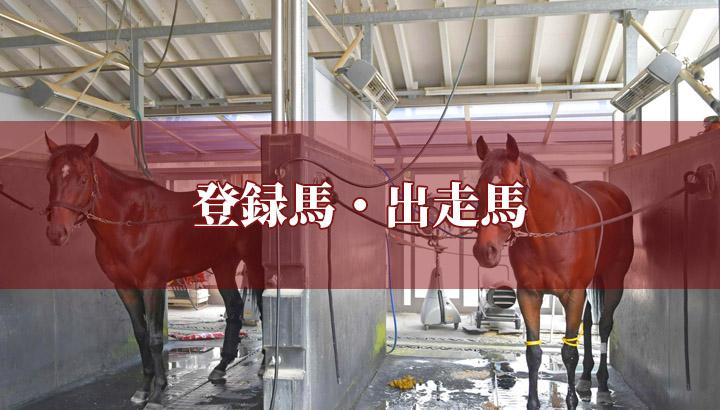 第38回 フェブラリーステークス(GⅠ)【登録馬】